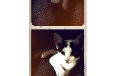 Photomaton & Polaroid
