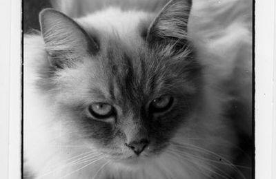 A fond dans le noir et blanc