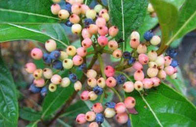 les fruits de l'automne