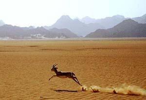 Symbolique de la gazelle en France, outre-Manche et outre-Atlantique (BBC, 03/10/06)