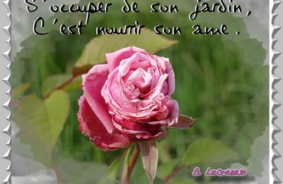 "Rosier ancien ""Albertine"" . ""La"" rose !"