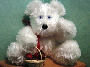 L'ours KYO (adopté)