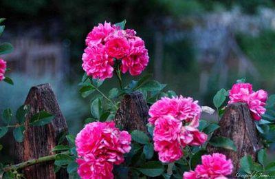 Faune et flore 1.