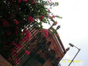 Ikebana de Delhy