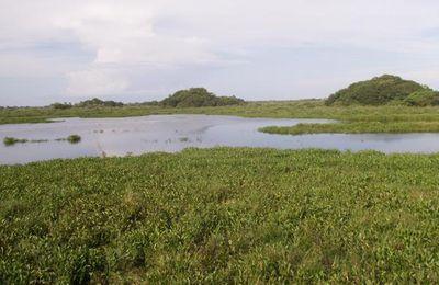 Corumba et le Pantanal