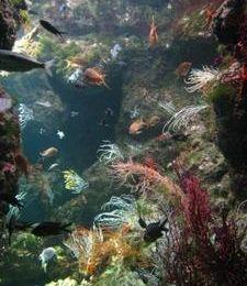 Aquarium de la Rochelle : une réussite !