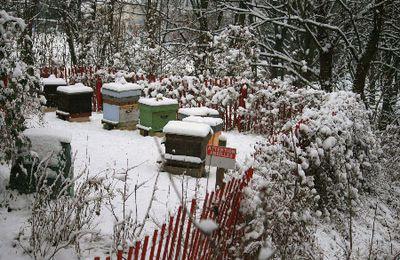 Neige sur le rucher