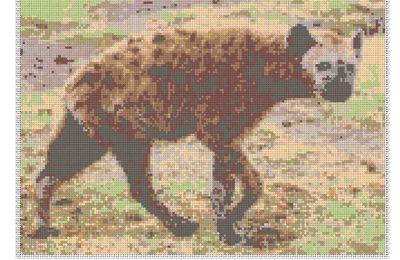 lions, zebre et hyenne pour avoir votre avis