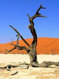 L'Algérie mobilisée pour lutter contre la désertification