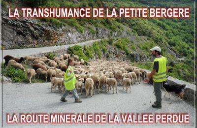 AU PAYS DE LA ROUDOULE (2) LA TRANSHUMANCE