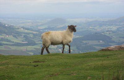Pays Basque 64