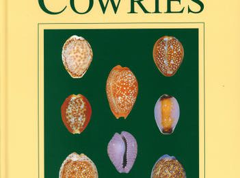 A Guide to Worldwilde Cowries