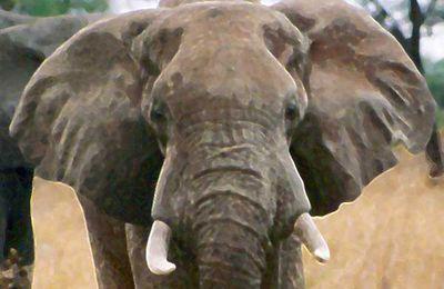 Contes pour enfants - Au Jardin des Tibous, il y a... des animaux du monde - Elephant