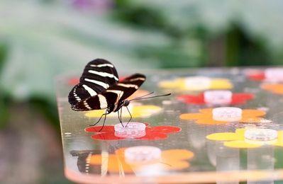 Le jardin des papillons de Knokke