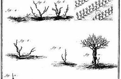 La taille de la vigne: l'encyclopédie de Diderot et D'alembert