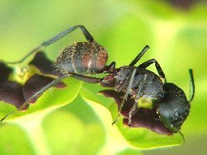 Halte aux blattes et fourmis..