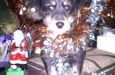 Petit chien de Noël...