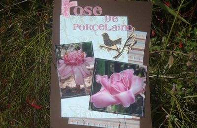 rose de porcelaine