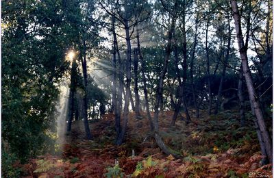 Rayons d'automne