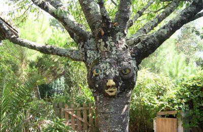 """Mon arbre """"fay"""""""
