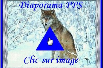 ...Les Loups (diaporama PPS) !