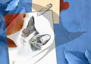 - Poster vos dessins de chats : cadeau à gagner ! - A jewel to win ! contest : send me your cat drawings.