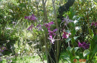 Jardin des orchidées à Saint Joseph