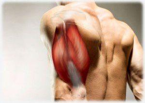 Le point sur les triceps