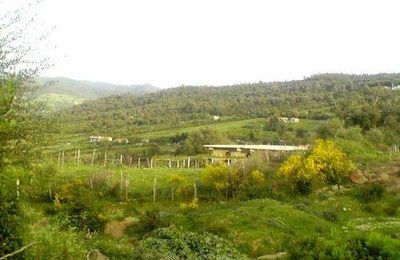 Ouled Arbi