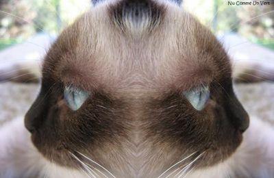 Profil d'un félin