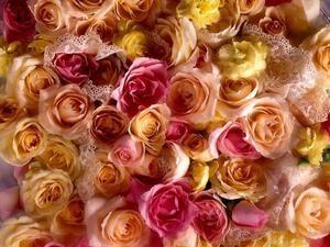 Encore des roses !