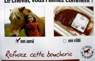 Sauver les chevaux de la barbareries humaine!