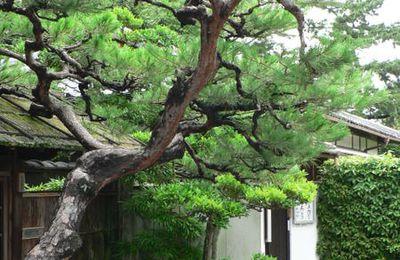 Autour du Nanzen ji 南禅寺 et du Tenjuan 天授庵
