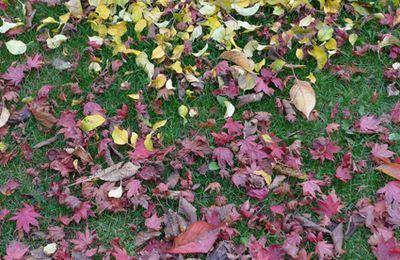 souvenir d'automne / memories of fall #8