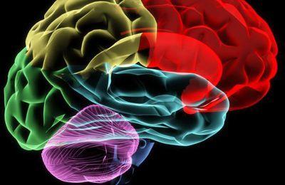 Le cerveau imparfait...neurexine, neuroligine et autisme