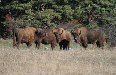 La réserve du Haut Thorenc
