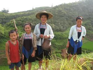 récolte du riz précoce