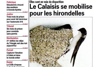Le journal Nord Littoral mobilisé pour défendre les Hirondelles et les Chauves-souris