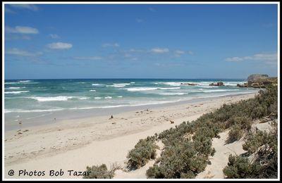 Kangaroo Island, l'île des otaries