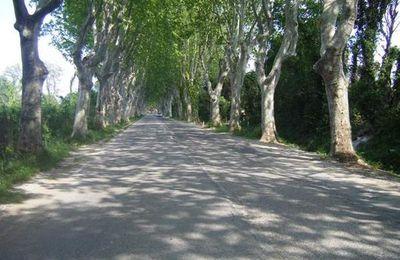 Saveurs de Provence, chiffonnade de platane