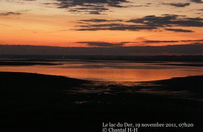 Le lever des grues cendrées au lac du Der