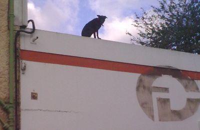 un chien sur un toi (pas brûlant) !!!!