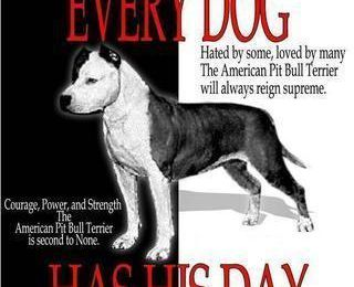 Every Dog has his Day...