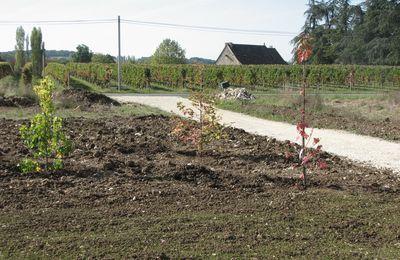 Aménagement du jardin : Plantations...