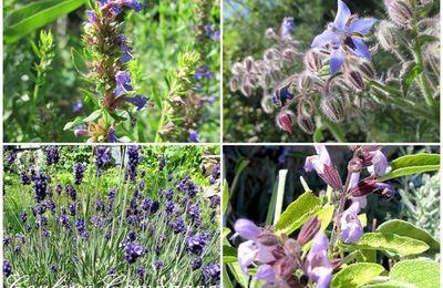Le jardin bleu.