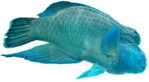 Petit glossaire aquatique sous-marin