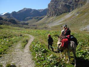 Des ânes et une mule, un refuge bien fréquenté et écologiquement correct!