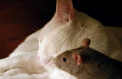 chat et rat ??