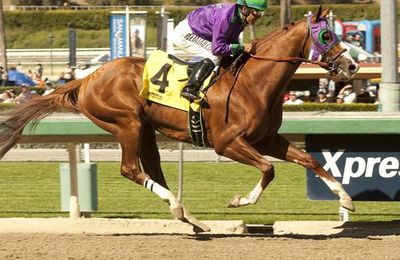 California Chrome !