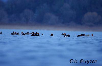 Affût flottant sur le Lac